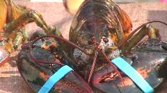 Jm959-Lobster Closeup Stock Footage