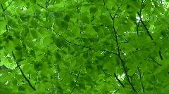 foliage background - stock footage
