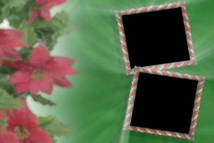 4907green velvet candy can poinsettia video photo picture frames - stock footage