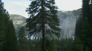 Stock Video Footage of Yosemite, Moody North Wall Center Tree-A
