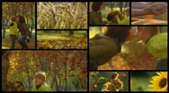Stock Video Footage autumn Fall Stock Footage