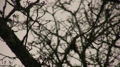 Branches_08 Stock Footage