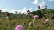 Cades Cove Butterflies 1 Stock Footage