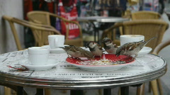 HD1080 House sparrow feeding in the city. Stock Footage
