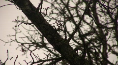 Branches_07 Stock Footage