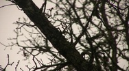 Stock Video Footage of Branches_07