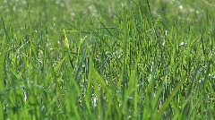 Spring grass. Stock Footage