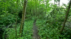 walking in forest path - stock footage