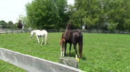 Colt and mare stay close with other horse Stock Footage