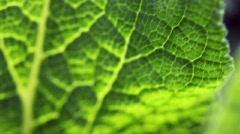 Veins of green sheet Stock Footage