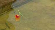 Lonely flower Stock Footage