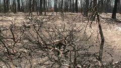 Forest fire aftermath Stock Footage