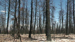 Forest fire, aftermath Stock Footage