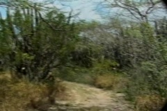 Coyote Road Illegal Aliens Entry Point & Tropical Cactus - stock footage