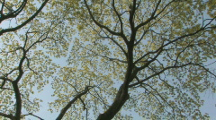 Spring trees. Circular pan. Stock Footage