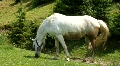 White horse on the meadow Footage