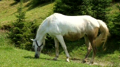 White horse on the meadow Stock Footage