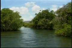 Tropical mangrove Amazon river similar setting  Stock Footage