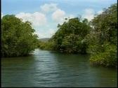 Tropical mangrove Amazon river similar setting  Stock Footage