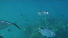 Fish Swim Towards Camera Stock Footage