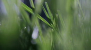 Stock Video Footage of Grass 02