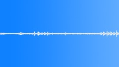 Buzzing wasp (Hymenoptera, Vespidae, Polistes sp.) - sound effect