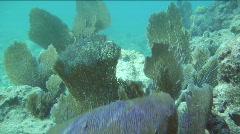 Fanning Sea Fans Stock Footage