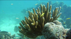 Stock Video Footage of Florida Keys soft coral formation