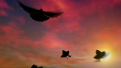 Pigeons flap and swoop at dusk Stock Footage