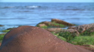 Stock Video Footage of Coastal rocks with green algae 4