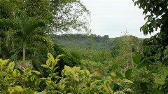 Jungle Stock Footage