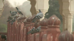 Pigeons at Amer fort in India Stock Footage