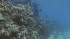 TropicalFish2 Stock Footage