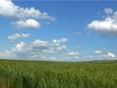Sky and  wheat Stock Footage