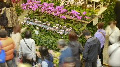 Hong Kong Flower Shop Stock Footage