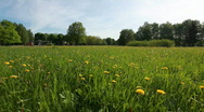 Flying above large field of dandelions Stock Footage