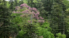 Cross in trees, garden in Rocamadour, France Stock Footage