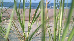 Wild grass on beach 2 - stock footage