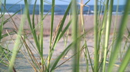 Stock Video Footage of Wild grass on beach 2