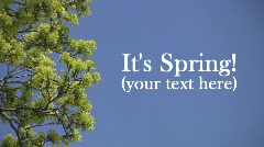 Spring Background with textspace.  Stock Footage