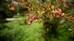 Red Blossoms Stock Footage