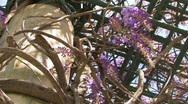 GardenLatticeTight.1080.PJ Stock Footage