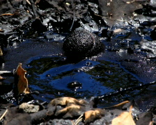 Tar Bubble 03 PAL Stock Footage