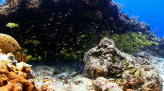 School of fish in cave Stock Footage