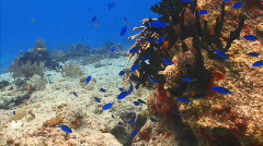 LD coral reef fish pan PR 1 Stock Footage