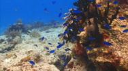 LD coral reef fish pan PR 1 Stock Footage