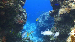 Coral formations with fish Stock Footage