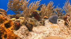 Coral reef Locked shot Stock Footage