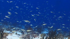 School of small reef fish on wall Stock Footage
