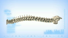 Rotating spine with alpha channel - stock footage